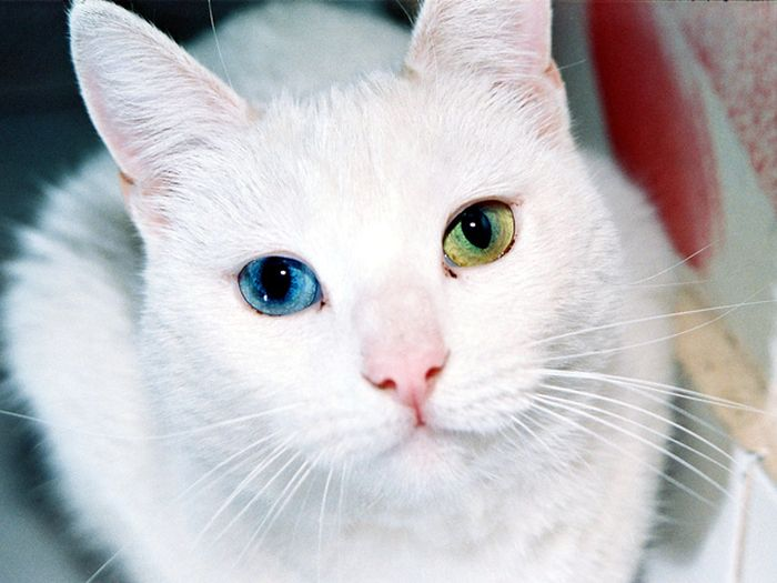gorgeous_cats_22