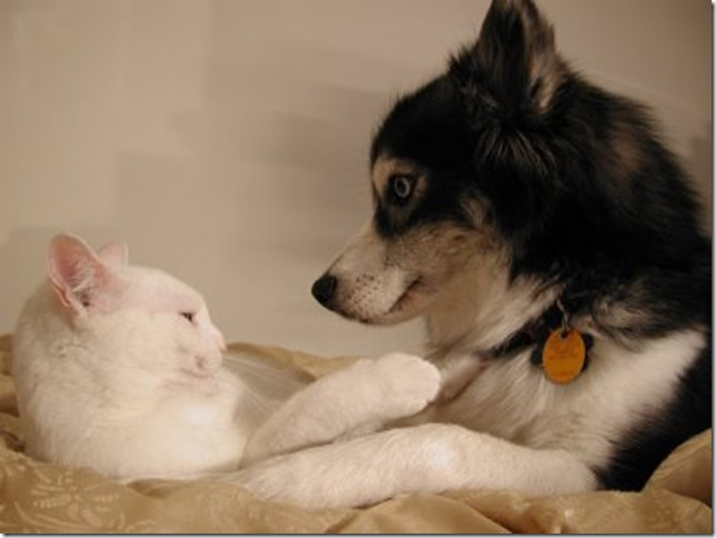 cat_and_dog_(1)