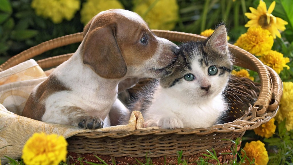 cat_and_dog_(11)