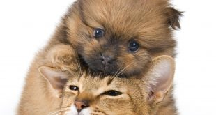 cat_and_dog_(12)