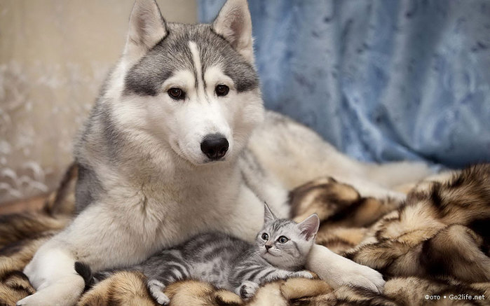 cat_and_dog_(14)