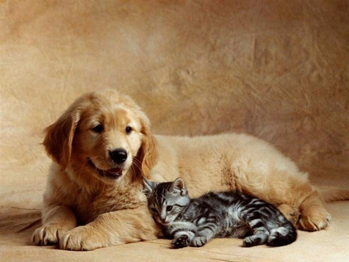 cat_and_dog_(18)