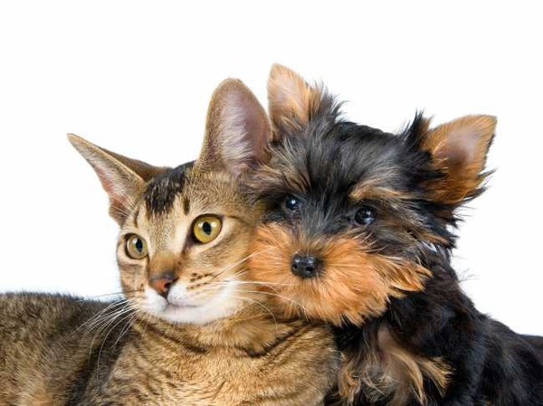 cat_and_dog_(2)