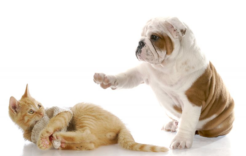 cat_and_dog_(6)