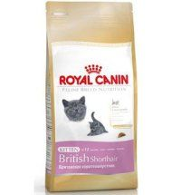 royal_canin_british_kitten
